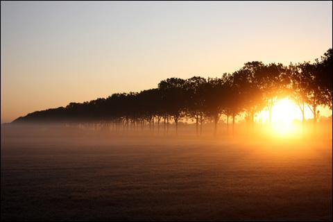 阳光挥洒在大地上,雾气逐渐的消散(图片来源网络)图片