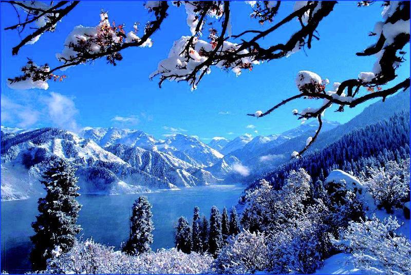 今年可能冷冬,苗木如何防冻?