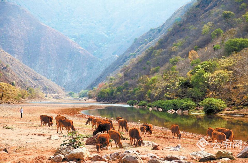 楚雄大山风景图片