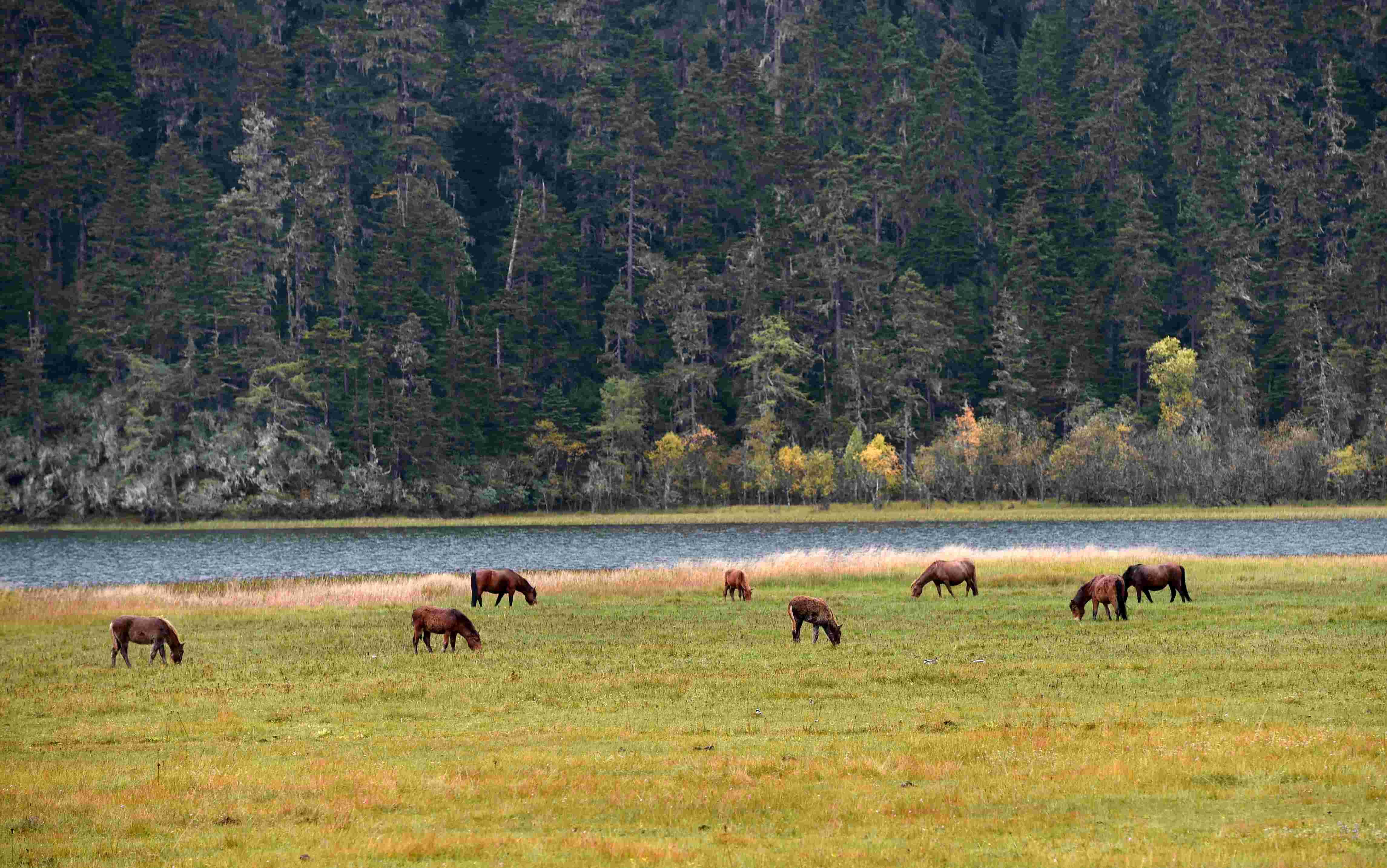 新华社照片,香格里拉(云南),2015年10月5日   幽美迷人普达措   这是10月1日拍摄的香格里拉普达措国家公园景色。   位于云南省迪庆藏族自治州香格里拉市境内的普达措国家公园,2007年正式开放。公园内的高山、湖泊、湿地、原始森林等自然景色吸引各地游客徜徉其间,流连忘返。   新华社记者陆波岸摄