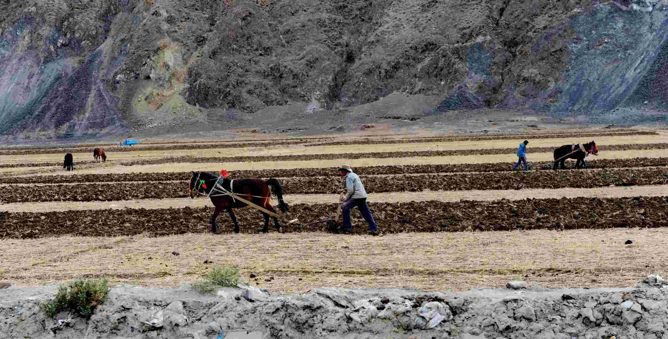 日喀则市白朗县嘎东镇的村民